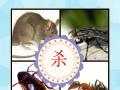 杭州专业家庭灭鼠除蟑螂【上门服务】灭跳蚤淘宝交易