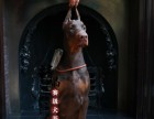 杜宾犬好养吗 哈尔滨哪里有卖的