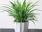 烟台绿植租摆花卉租赁植物销售植物墙定制鲜花包月 全城配送