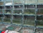 广州海鲜冷水机,广州海鲜池制冷