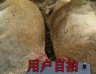 华创猎友电捕猎机加盟 北京华创猎友最新型电捕猎机