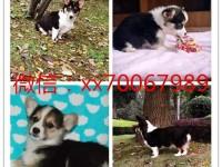 杭州犬舍出售世界各类名犬,签协议包健康包纯种