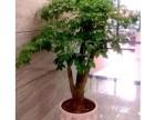 渭南香凝花卉绿植批发零售 企事业单位租赁用花 园林绿化工程