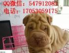 出售高品质沙皮狗幼犬 体型完美 健康纯种