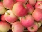 山东嘎啦苹果供应商