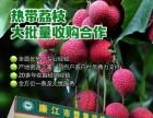 2019廉江市丰业种植专业合作社与全国商家合作收购热带荔枝
