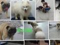 YOHO有货宠物 宠物狗洗澡九元包括全身护理剪指甲