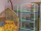 正规猫舍 专业繁殖 加菲猫幼猫 同城免费送上门挑选