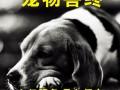 珠海狗狗火化 猫咪火化 仓鼠火化 刺猬火化 宠物安葬火葬