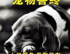 珠海宠物火化 宠物安葬宠物火葬 24小时服务 从一宠物火化