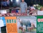 徽德农业有机野猪肉