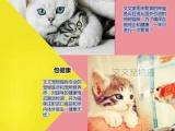 美国短毛猫幼崽纯种猫舍现有美短虎斑、加白 体格大
