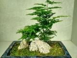 小湯山寫字樓辦公室綠植租擺 綠植養護 盆栽租售
