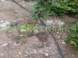 重庆渝北区节水滴灌小管出流|农用稳流器