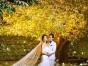 爱神婚纱新景全球首 发:十里桃花、璀璨星河