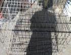 狗笼子猫笼子