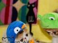 欧迪加菲名猫舍 自家繁殖 纯种英国短毛猫 蓝猫DMM