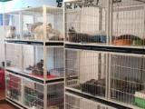 所有貓咪24小時家庭散養的環境 自由的生活和高品質