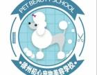 徐州初心宠物美容培训学校火热招生中!