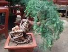 滨江花卉盆景植物租赁