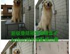 馨安犬舍宠物俱乐部