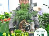 武汉开业乔迁送礼大型绿植送到