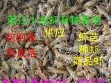 小龙虾优质 种虾 供应