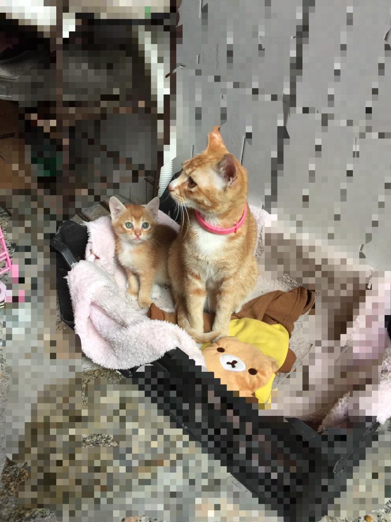 小猫咪免费送