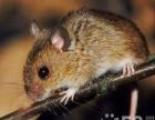 20年虫鼠害防治、见效收费、价格合理、质量有保障