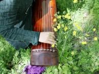 合肥哪里有古琴培训班 合肥古琴学习班