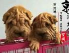 泉州哪里有卖沙皮犬的