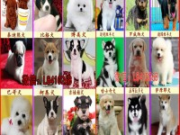 重庆宠物狗打折促销800一只金毛犬萨摩耶 哈士奇犬 阿拉斯加