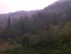 1380林地、坡地、荒地出租