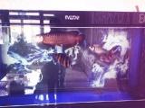 一条高背45公分金龙鱼和一对粗线