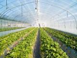 利丰塑料供应同行中优良的山东农膜-石家庄蔬菜包装膜