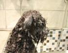 高浓度人工碳酸泉装置在宠物行业的应用以及带来的冲击