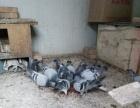 合水鸽子便宜出售