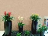 承接北京各地区绿植租赁花卉租摆盆栽租赁