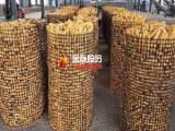 圈地圈山圈玉米塑料网 土工格栅厂家