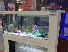 洛阳生态水族箱加盟,生态鱼缸,生态鱼缸批发,免换水
