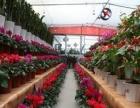 金管家园艺:盆景绿植租摆、大小型绿植零售、家用办公