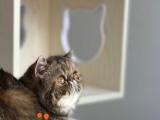 MJ家的猫,关注关注