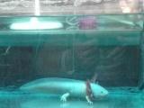 纯白色六角恐龙
