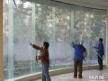 滨州金豪保洁 -专业家庭保洁 擦玻璃
