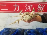 盘锦河蟹批发多少钱一斤的价格行情咨询电话