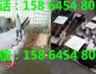 汉中出售肉鸽价格公斤元宝鸽多少钱元宝鸽厂家