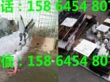 鄂尔多斯公斤元宝鸽价格便宜元宝鸽哪里有卖