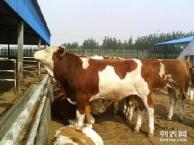 长治小牛犊价格 长治肉牛养殖场 长治肉牛犊价格