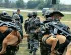 马犬,军犬,仪征地区出售高品质马犬,