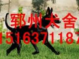 漳州黑狼犬图片哪里有卖黑狼犬的